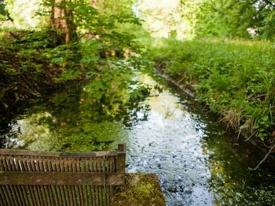 le ruisseau dans le parc