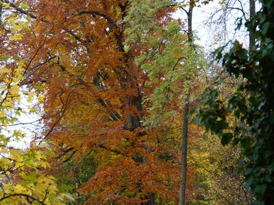 parc en automne