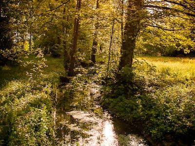 Bach im Schloss-Park