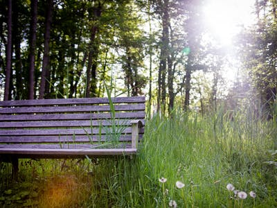 Platz zum Entspannen im Schloss-Park
